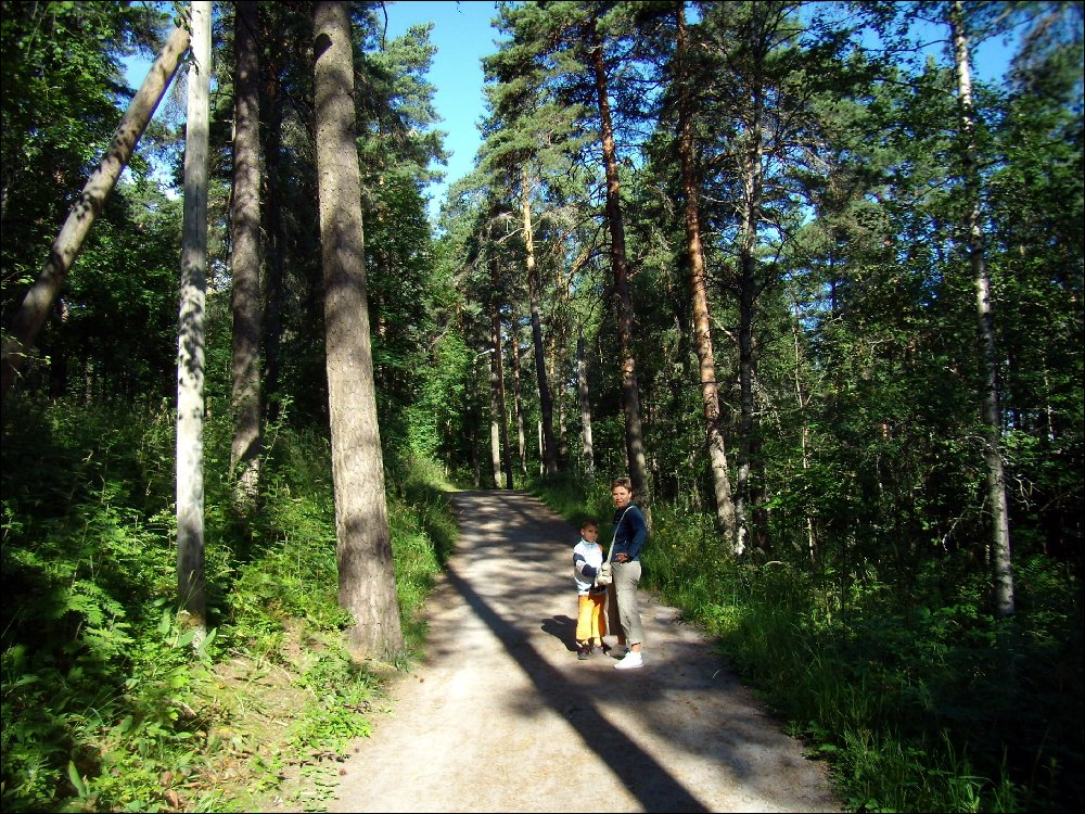 Tampere, foresta Pyynikki