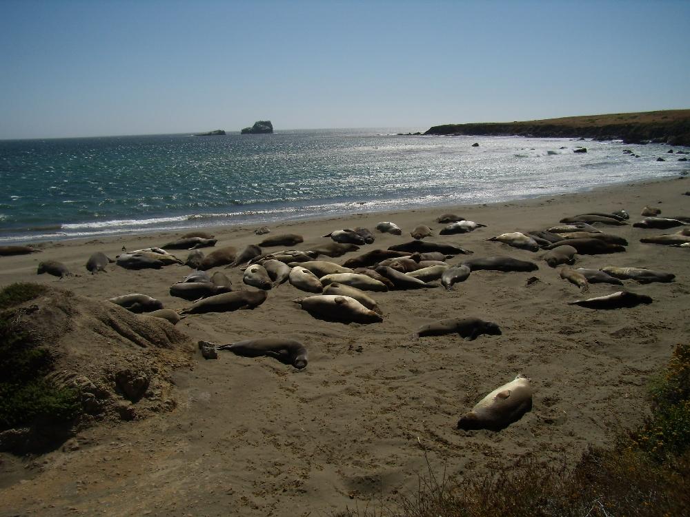 Piedras Blancas con gli elefanti marini