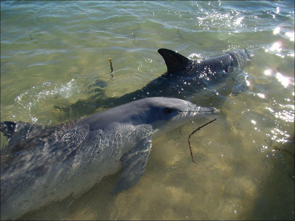 I delfini di Monkey Mia