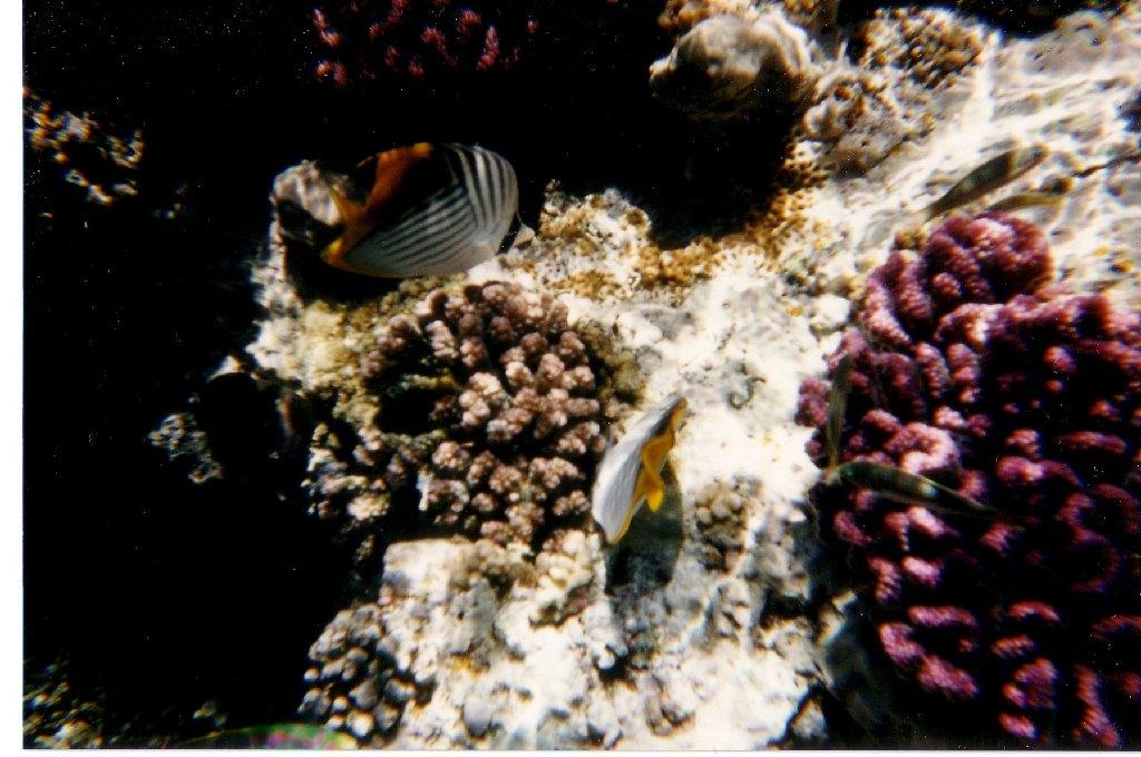 Maldive, Paradiso dei sub