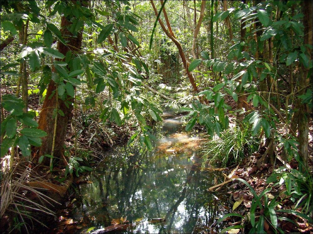 La giungla dietro al resort